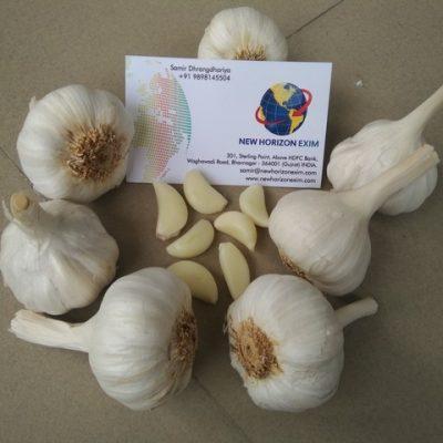 Garlic_00001